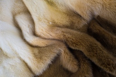 How to choose a flattering fur color that matches your personal style